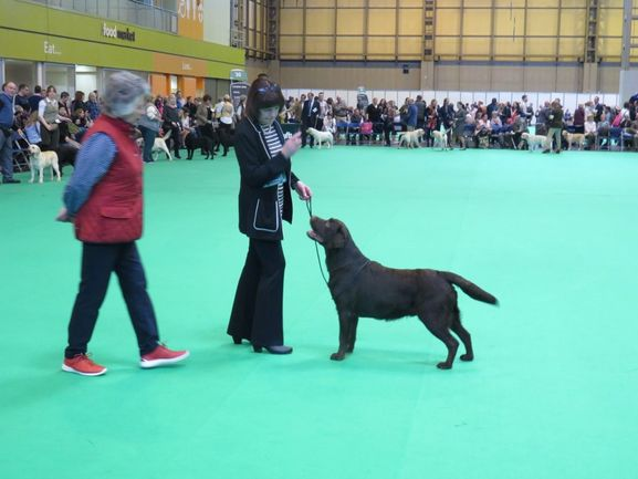 Percy at Crufts 2017